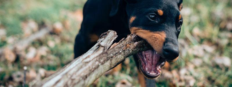Animal Attacks - Dog Bites are no Joke | Personal Injury Lawyers